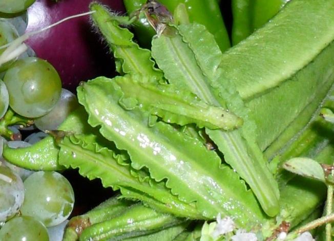 Asparagus Peas - August 26th